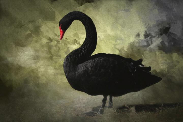 Notes du Cygne noir – Black Swan de Nassim Taleb
